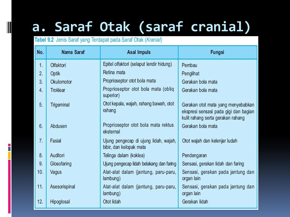 a. Saraf Otak (saraf cranial)