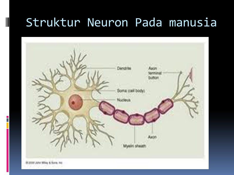 Struktur Neuron Pada manusia