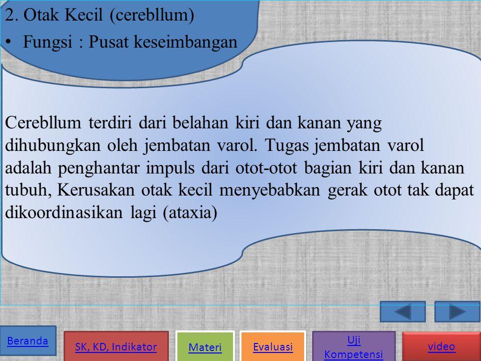 2. Otak Kecil (cerebllum)