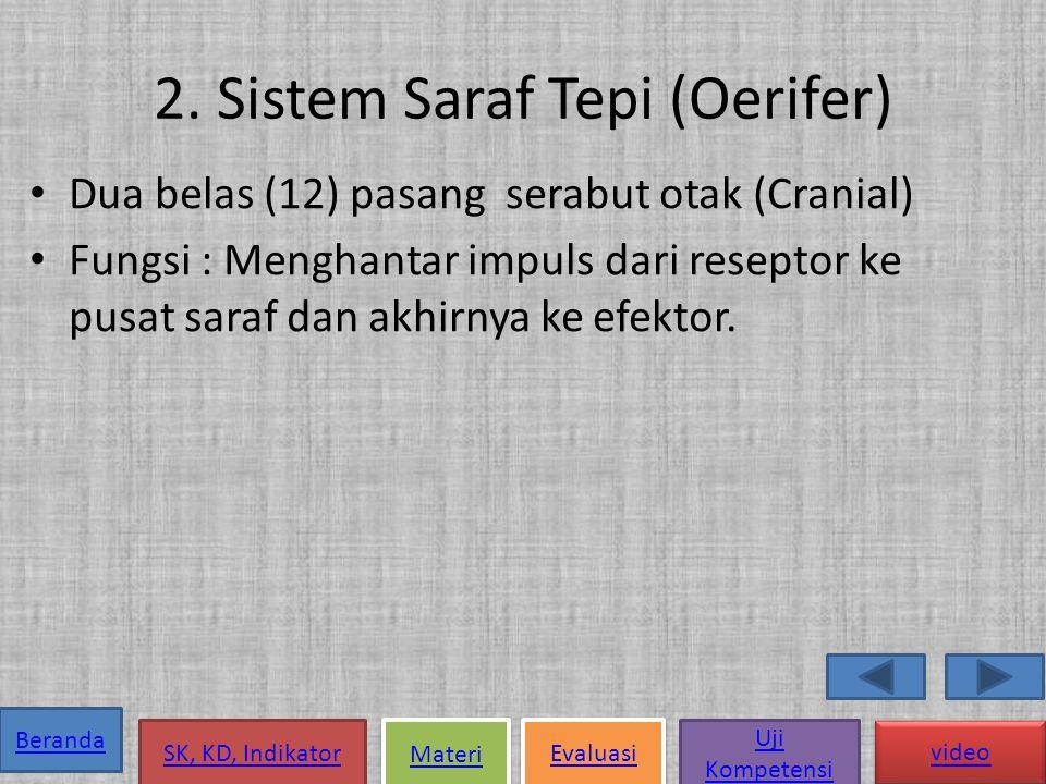 2. Sistem Saraf Tepi (Oerifer)