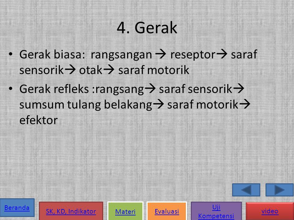 4. Gerak Gerak biasa: rangsangan  reseptor saraf sensorik otak saraf motorik.