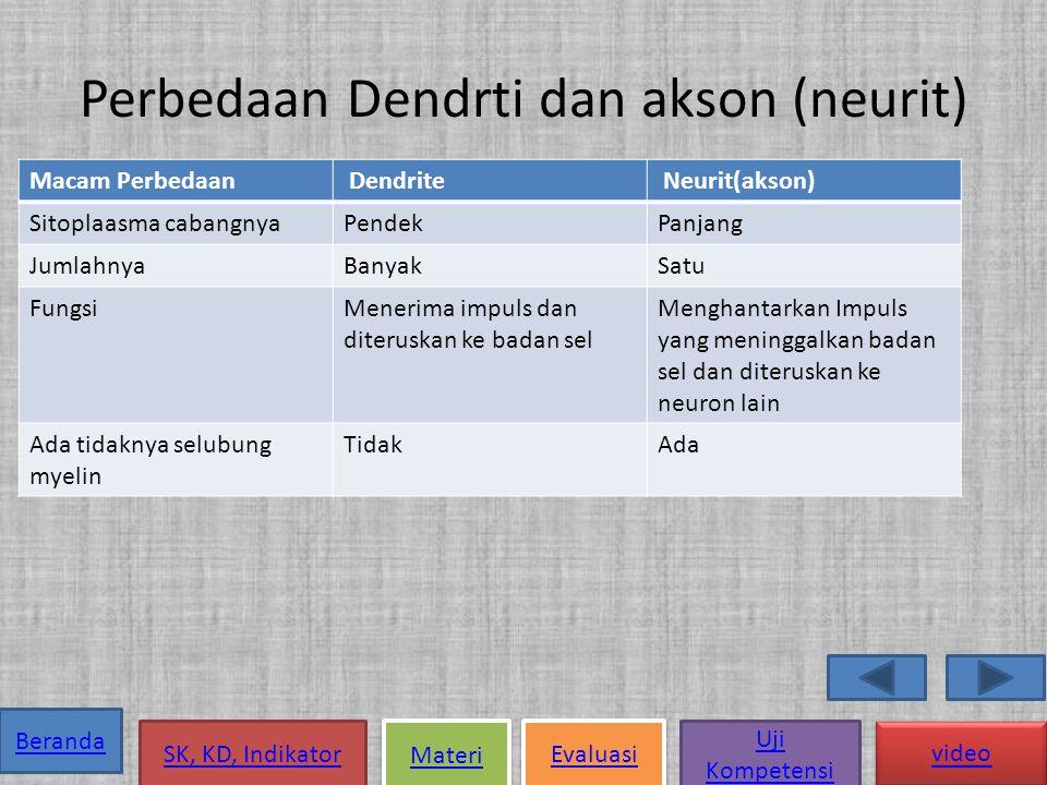 Perbedaan Dendrti dan akson (neurit)