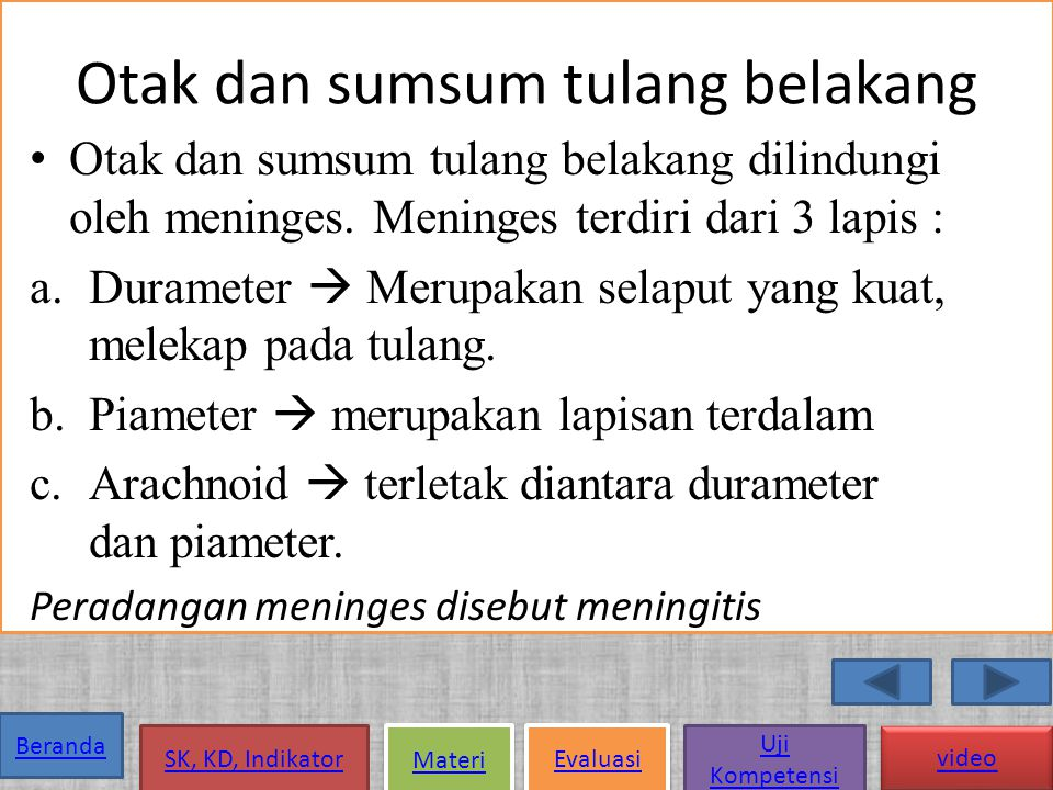 Otak dan sumsum tulang belakang