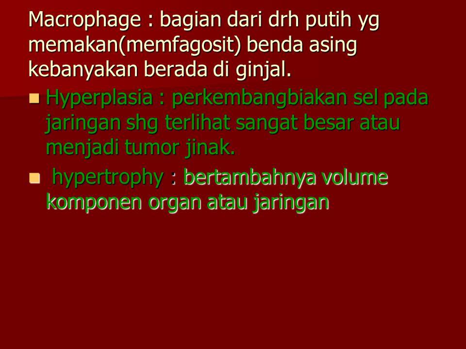 Macrophage : bagian dari drh putih yg memakan(memfagosit) benda asing kebanyakan berada di ginjal.