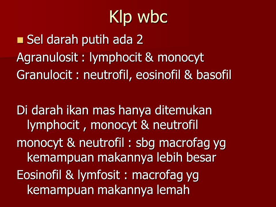 Klp wbc Sel darah putih ada 2 Agranulosit : lymphocit & monocyt