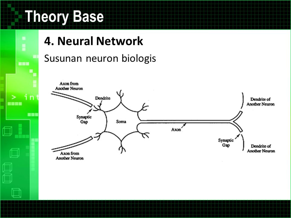 Theory Base 4. Neural Network Susunan neuron biologis