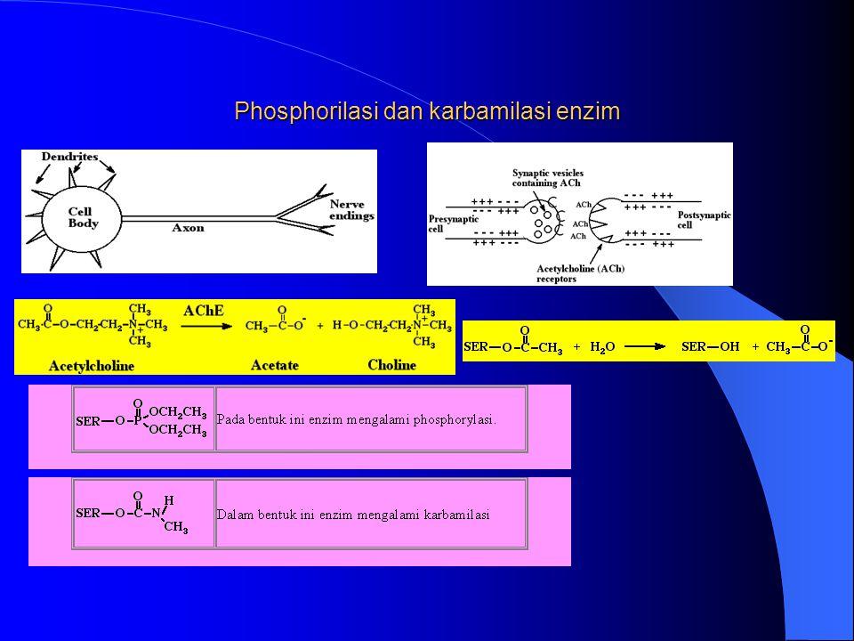 Phosphorilasi dan karbamilasi enzim