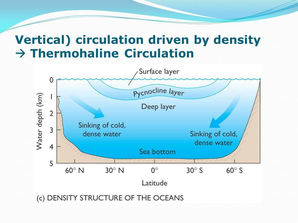 Vertical) circulation driven by density  Thermohaline Circulation