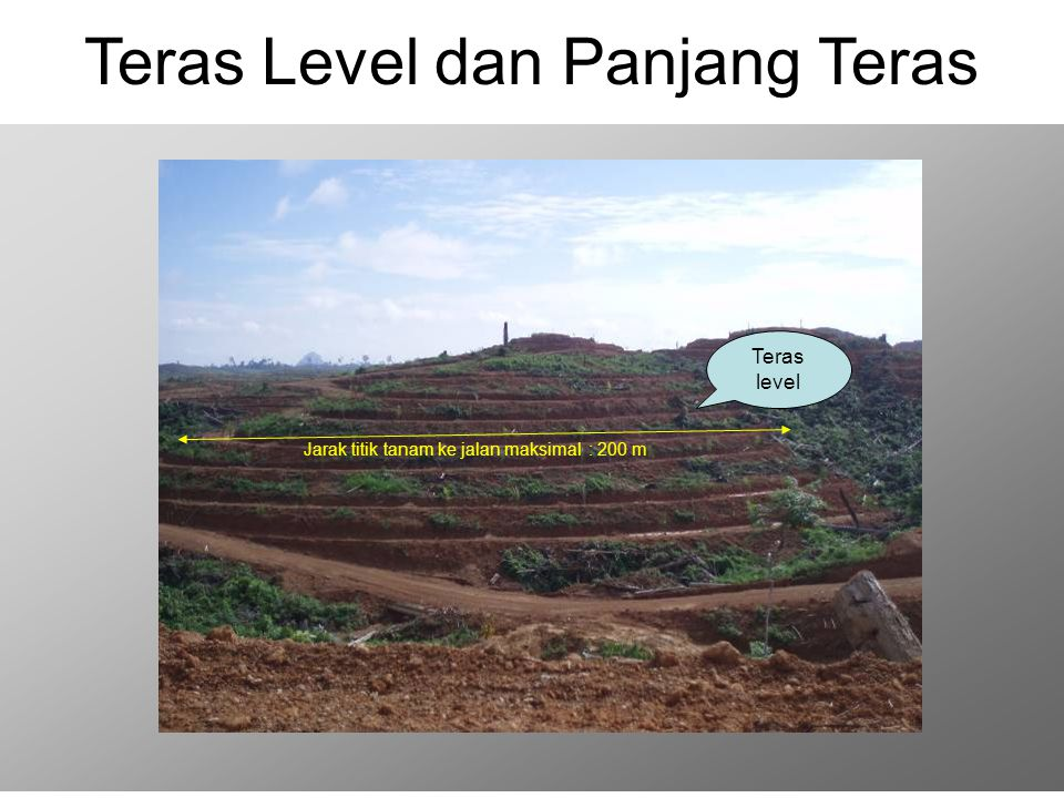 Teras Level dan Panjang Teras
