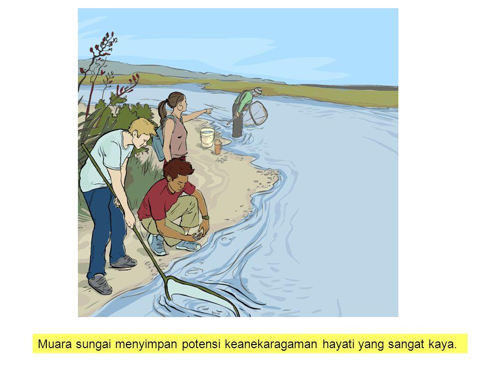 Muara sungai menyimpan potensi keanekaragaman hayati yang sangat kaya.