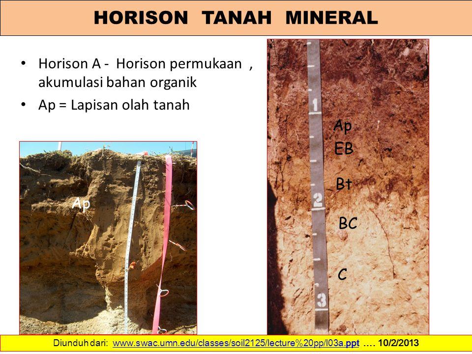 HORISON TANAH MINERAL Horison A - Horison permukaan , akumulasi bahan organik. Ap = Lapisan olah tanah.