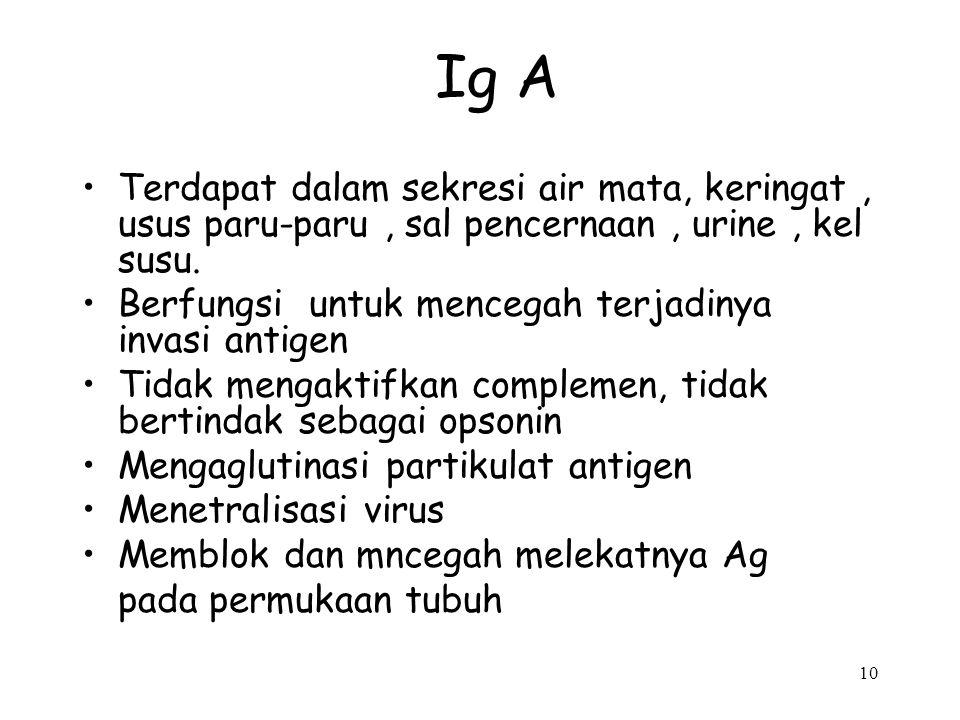 Ig A Terdapat dalam sekresi air mata, keringat , usus paru-paru , sal pencernaan , urine , kel susu.