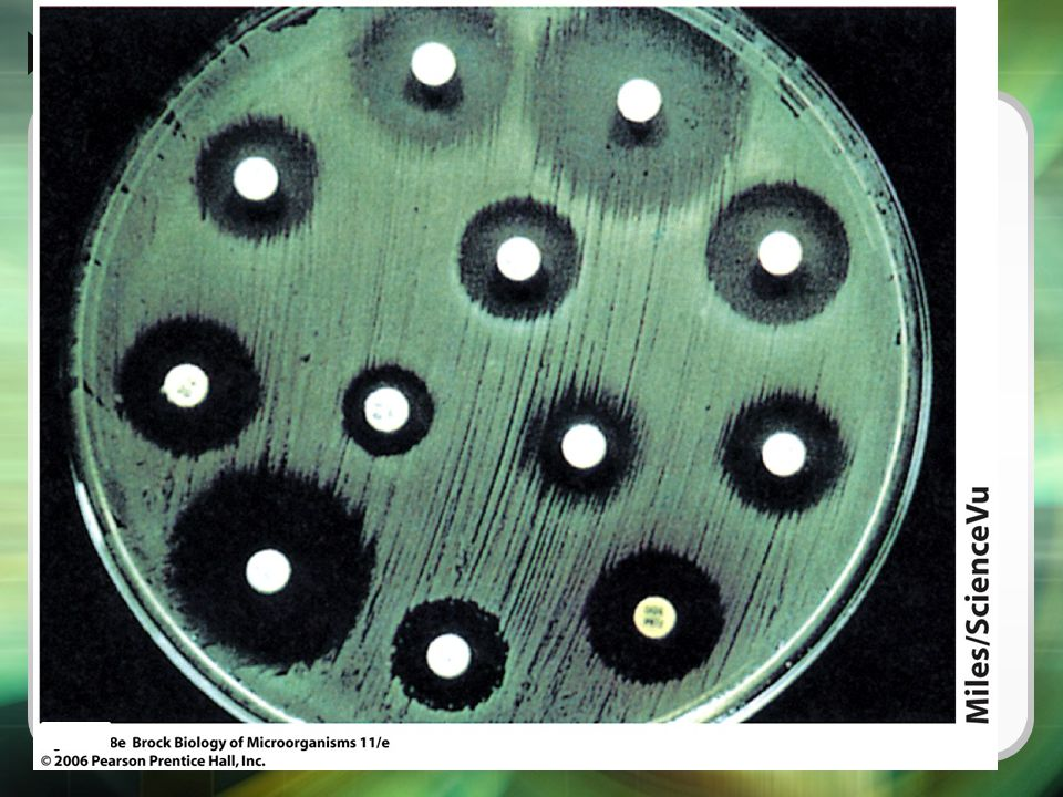 Agar media are inoculated by evenly spreading a defined density of a suspension of the pure culture on the agar surface. Filter paper disks containing a defined quantity of the antimicrobial agents are then placed on the inoculated agar