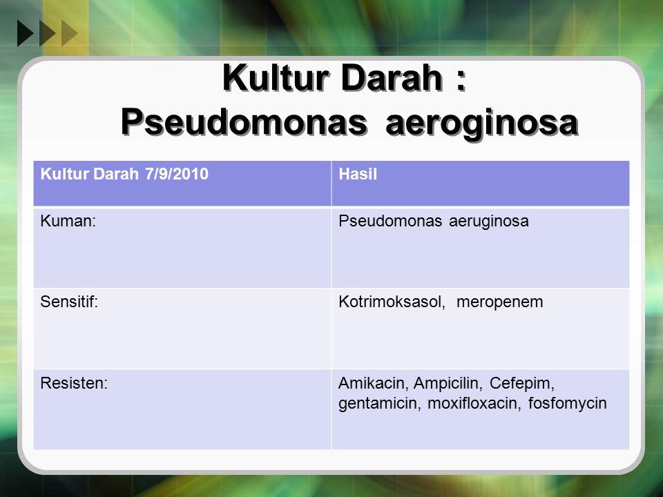 Kultur Darah : Pseudomonas aeroginosa