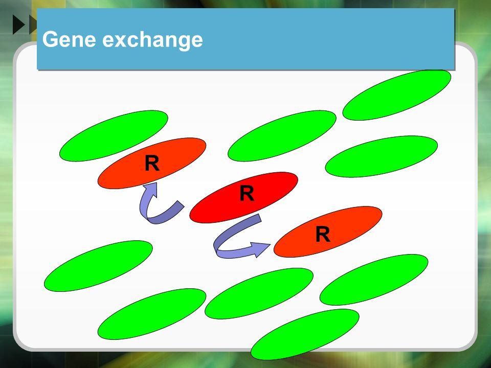 Gene exchange R R R