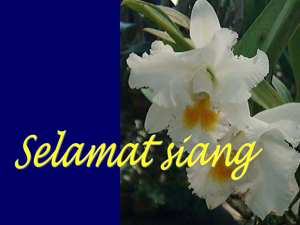 Selamat siang http://alhada-fisip11.web.unair.ac.id