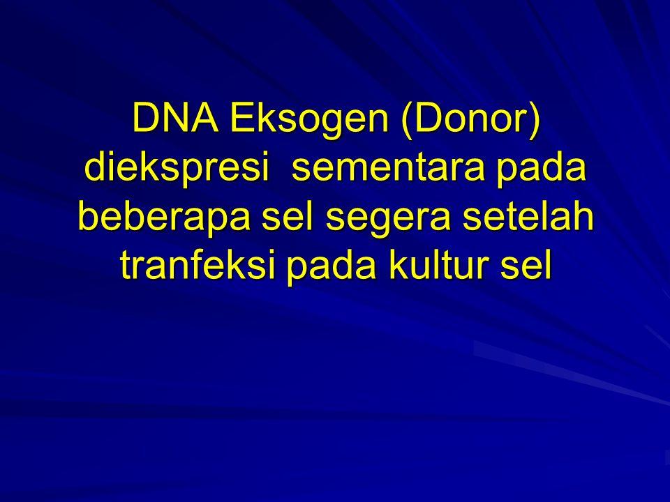 DNA Eksogen (Donor) diekspresi sementara pada beberapa sel segera setelah tranfeksi pada kultur sel