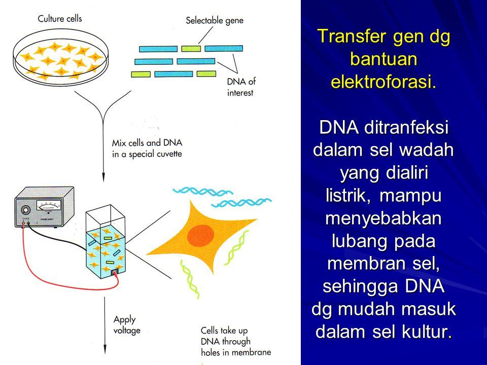 Transfer gen dg bantuan elektroforasi