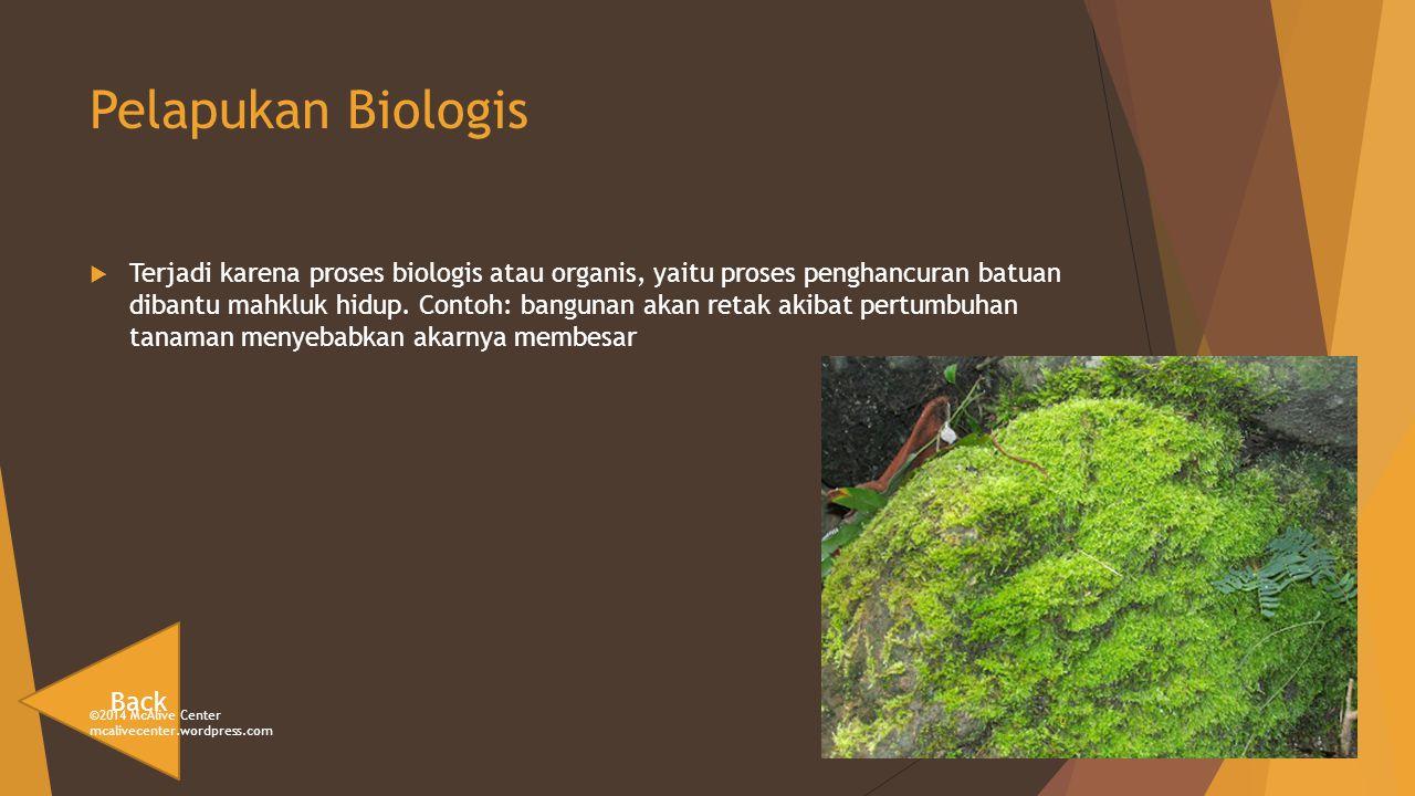 Pelapukan Biologis