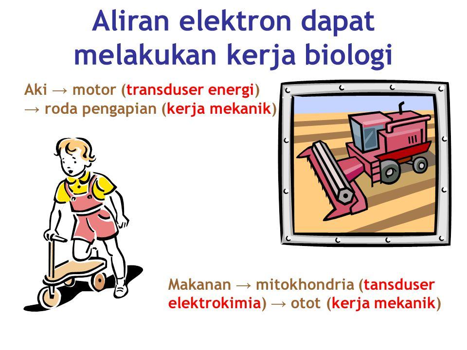 Aliran elektron dapat melakukan kerja biologi
