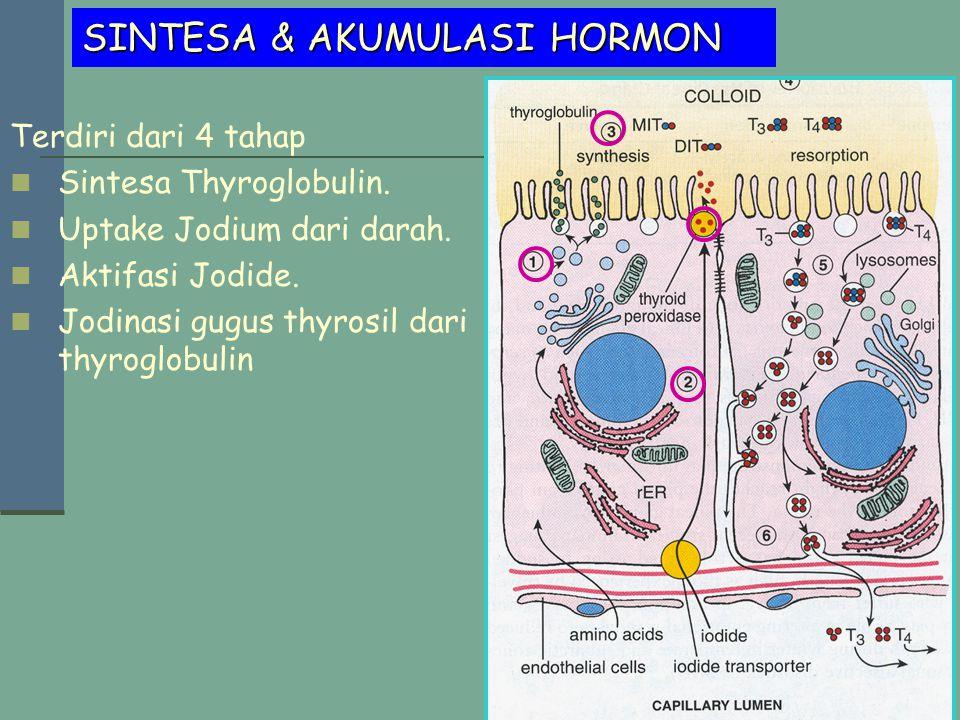 SINTESA & AKUMULASI HORMON