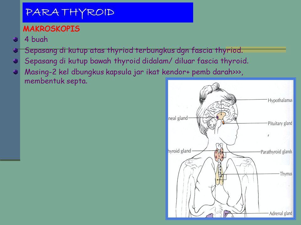 PARA THYROID MAKROSKOPIS 4 buah