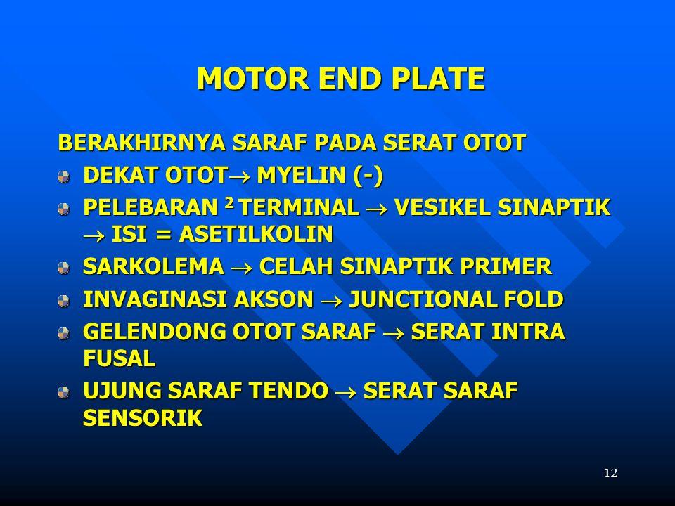 MOTOR END PLATE BERAKHIRNYA SARAF PADA SERAT OTOT