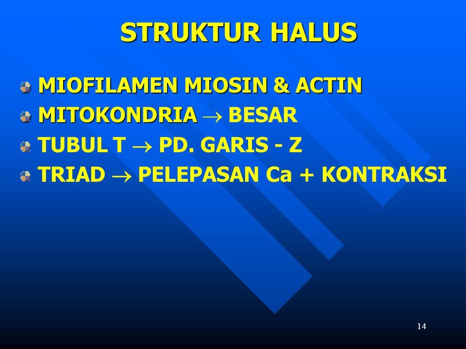 STRUKTUR HALUS MIOFILAMEN MIOSIN & ACTIN MITOKONDRIA  BESAR
