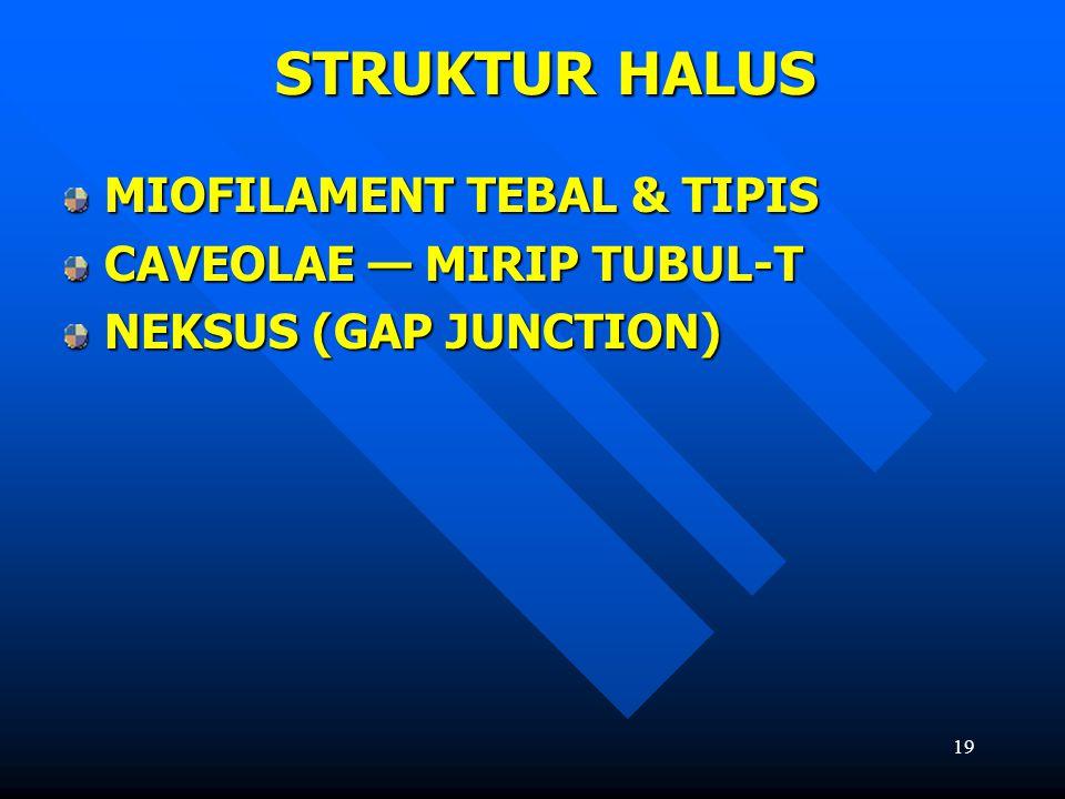 STRUKTUR HALUS MIOFILAMENT TEBAL & TIPIS CAVEOLAE — MIRIP TUBUL-T