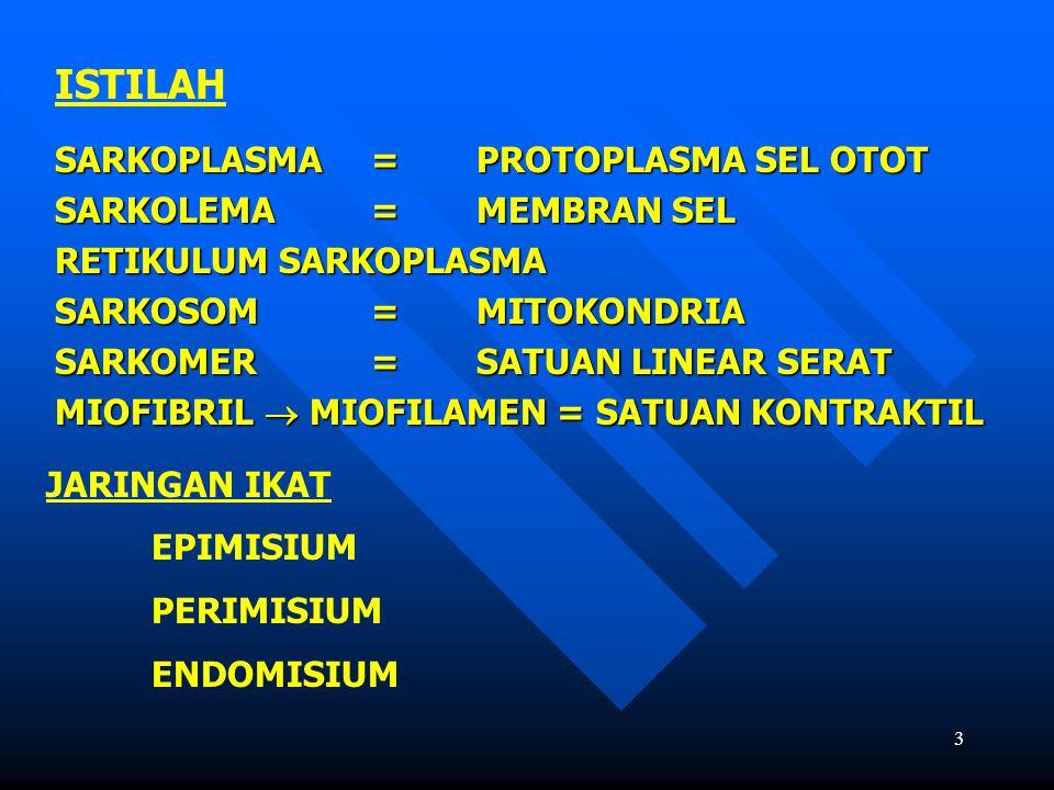 ISTILAH SARKOPLASMA = PROTOPLASMA SEL OTOT SARKOLEMA = MEMBRAN SEL