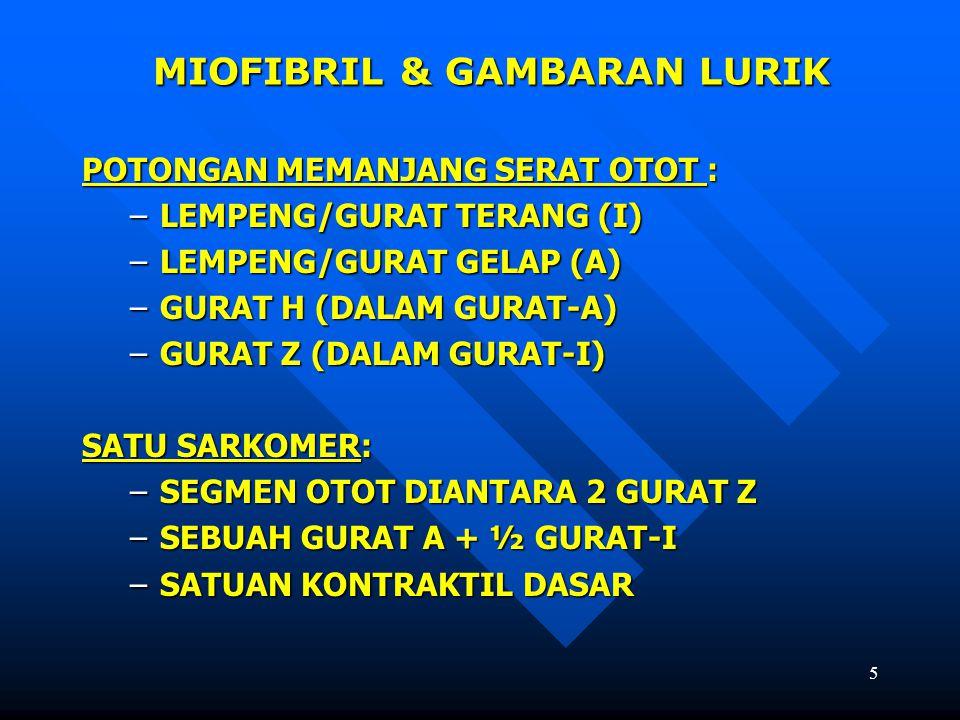 MIOFIBRIL & GAMBARAN LURIK