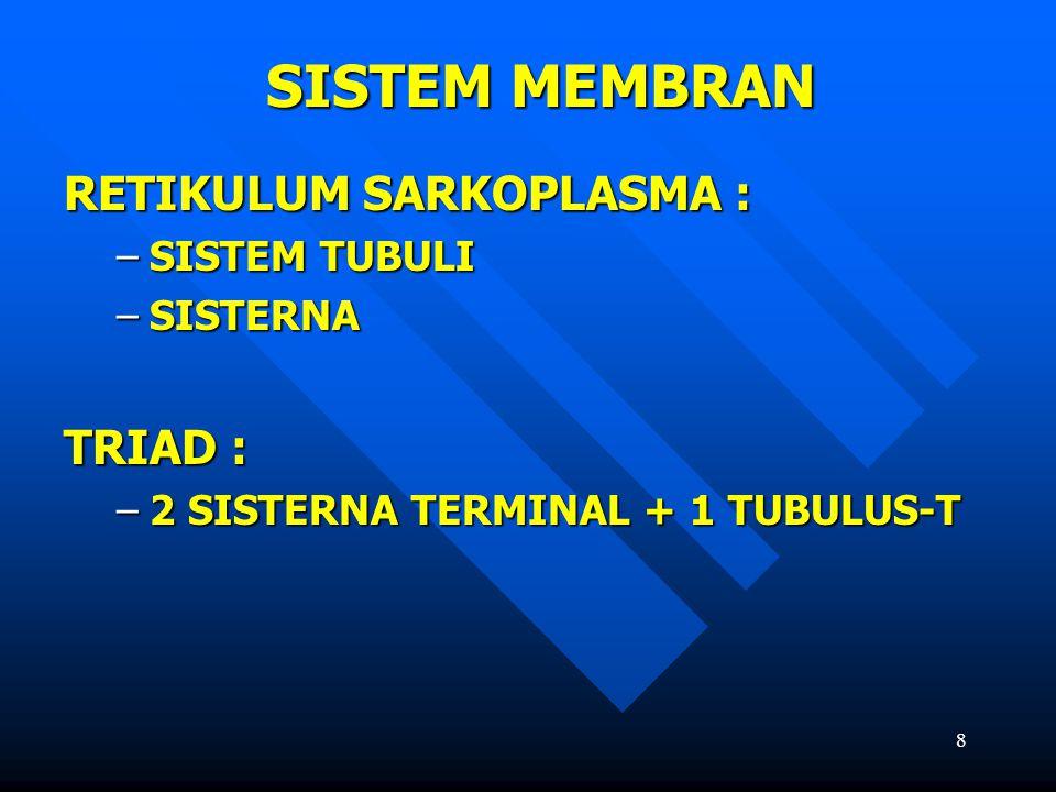 SISTEM MEMBRAN RETIKULUM SARKOPLASMA : TRIAD : SISTEM TUBULI SISTERNA