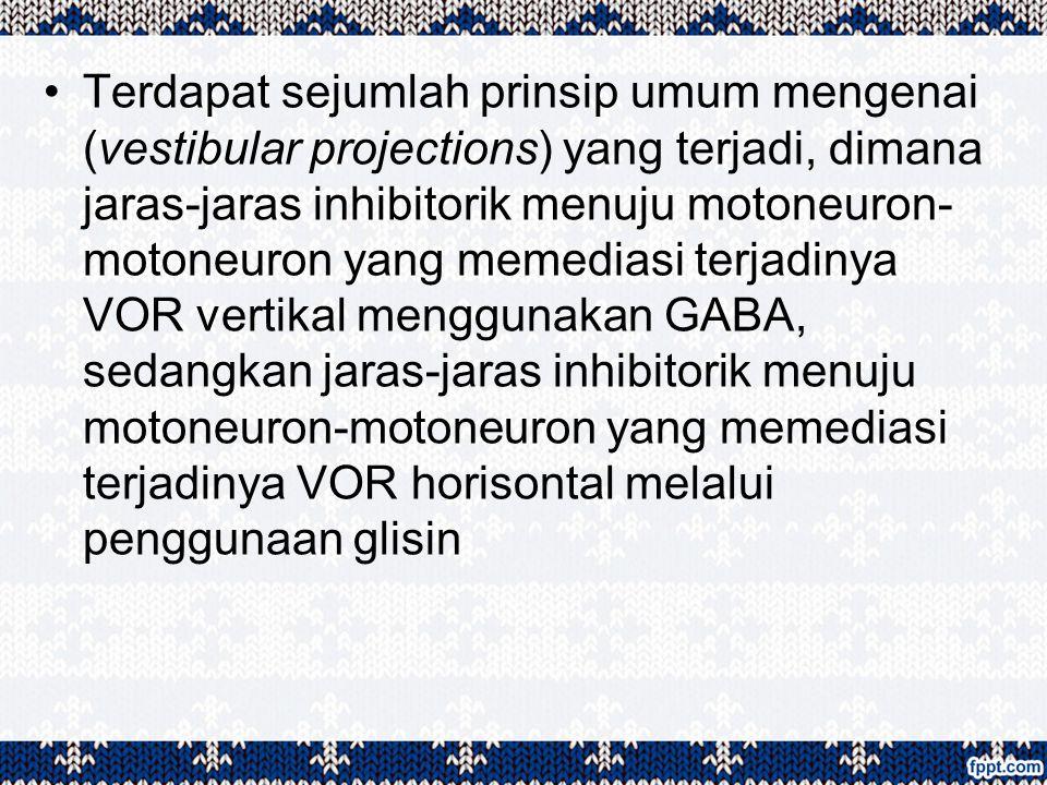 Terdapat sejumlah prinsip umum mengenai (vestibular projections) yang terjadi, dimana jaras-jaras inhibitorik menuju motoneuron-motoneuron yang memediasi terjadinya VOR vertikal menggunakan GABA, sedangkan jaras-jaras inhibitorik menuju motoneuron-motoneuron yang memediasi terjadinya VOR horisontal melalui penggunaan glisin
