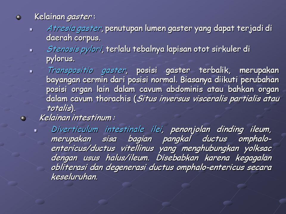 Kelainan gaster : Atresia gaster, penutupan lumen gaster yang dapat terjadi di daerah corpus.