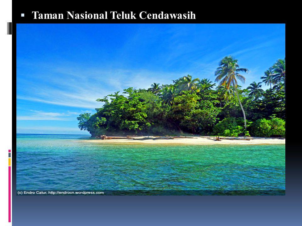 Taman Nasional Teluk Cendawasih