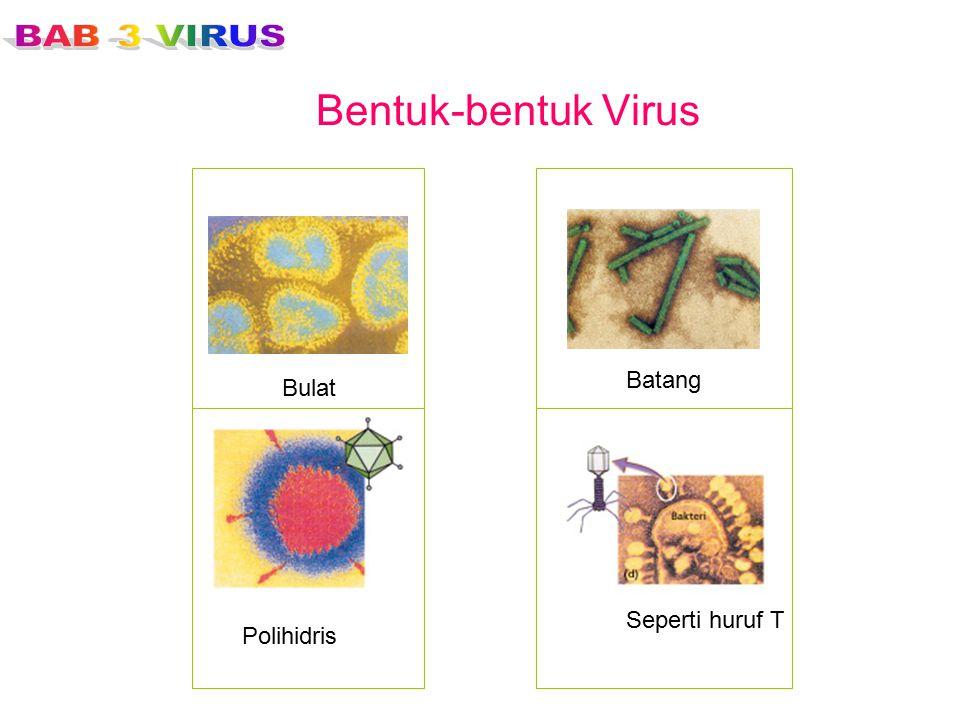 Bentuk-bentuk Virus Batang Bulat Seperti huruf T Polihidris