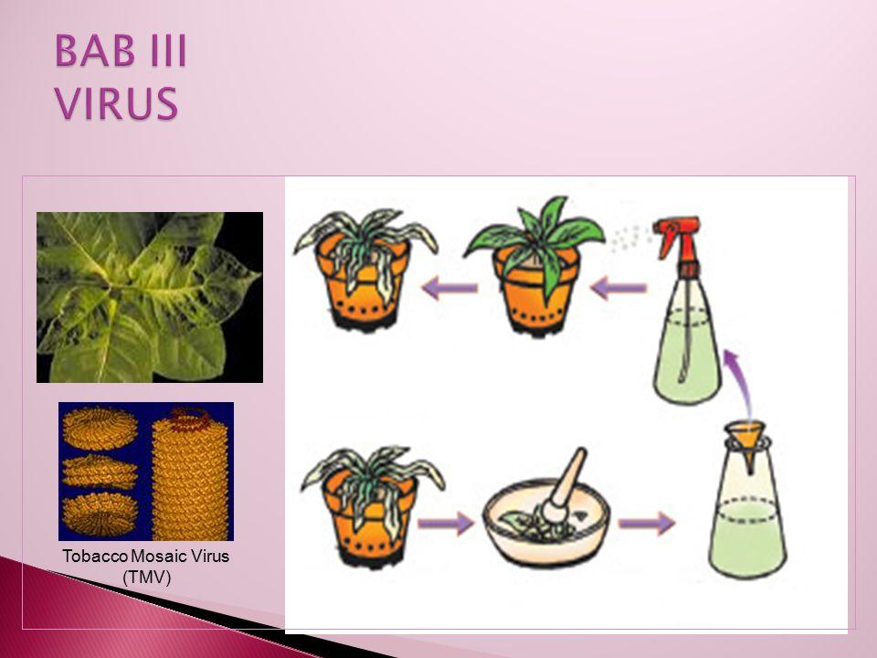 Tobacco Mosaic Virus (TMV)