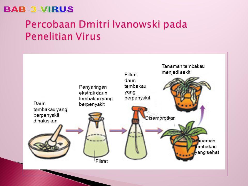 Percobaan Dmitri Ivanowski pada Penelitian Virus