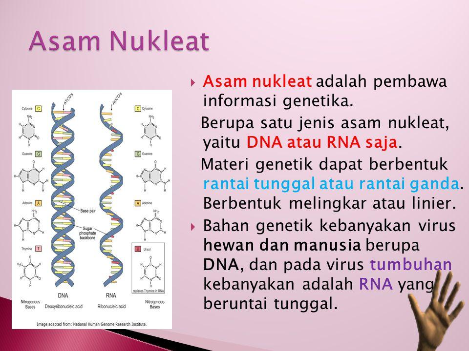 Asam Nukleat Asam nukleat adalah pembawa informasi genetika.