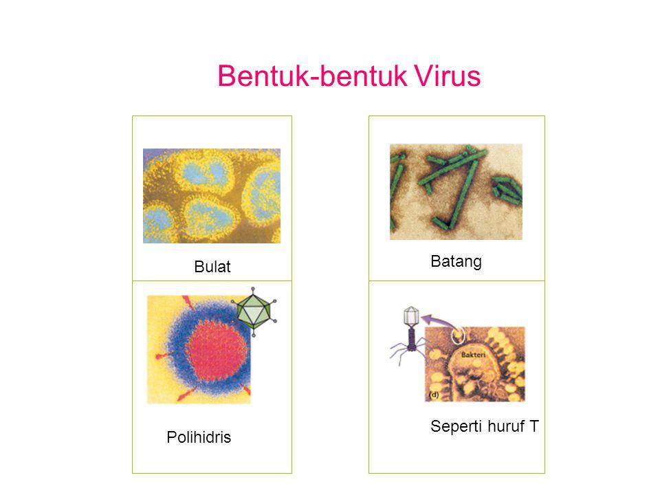 Bentuk-bentuk Virus Bulat Polihidris Batang Seperti huruf T