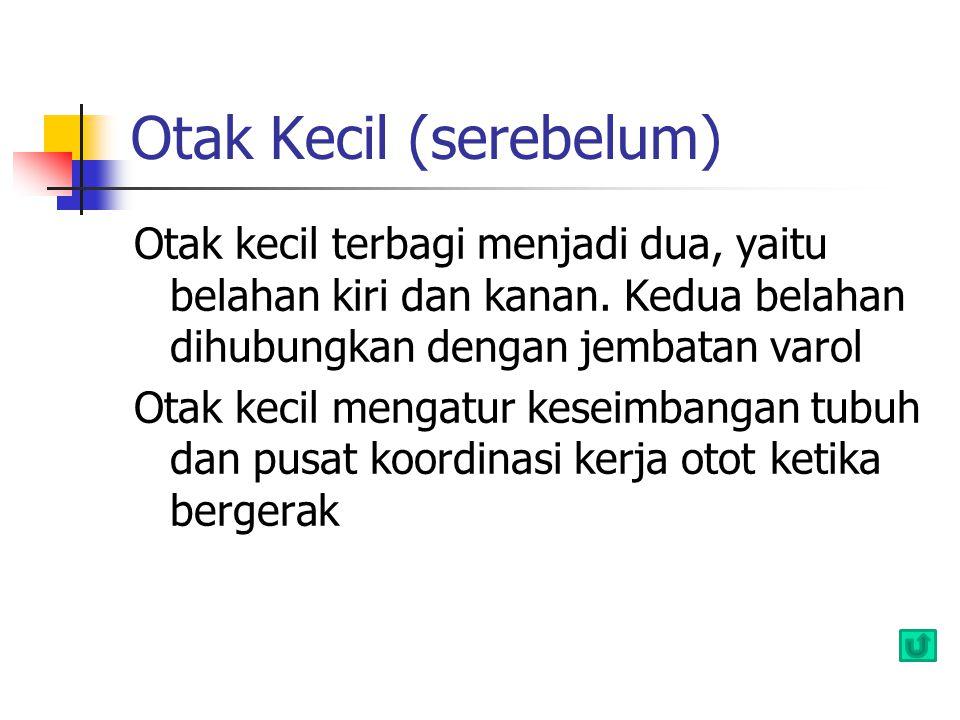 Otak Kecil (serebelum)