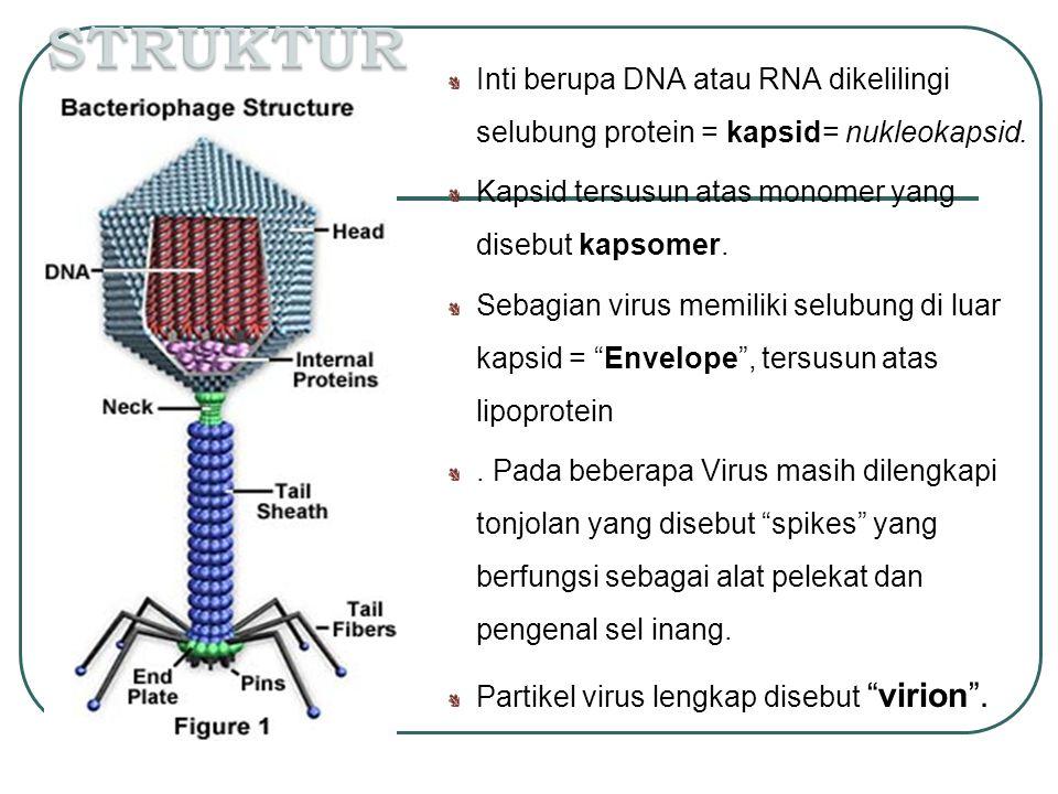 STRUKTUR Inti berupa DNA atau RNA dikelilingi selubung protein = kapsid= nukleokapsid. Kapsid tersusun atas monomer yang disebut kapsomer.