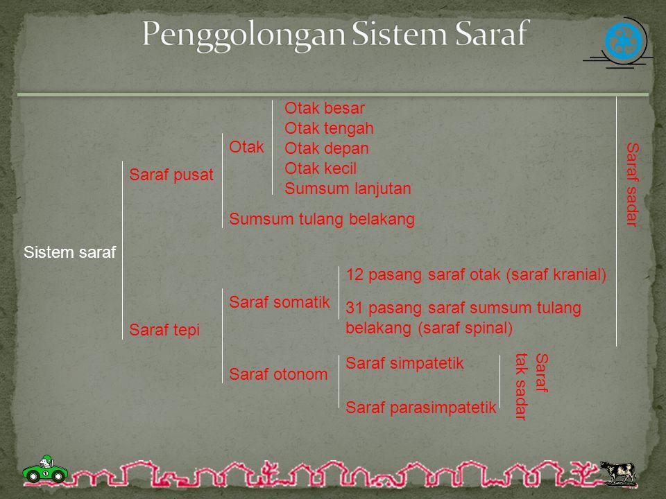 Penggolongan Sistem Saraf