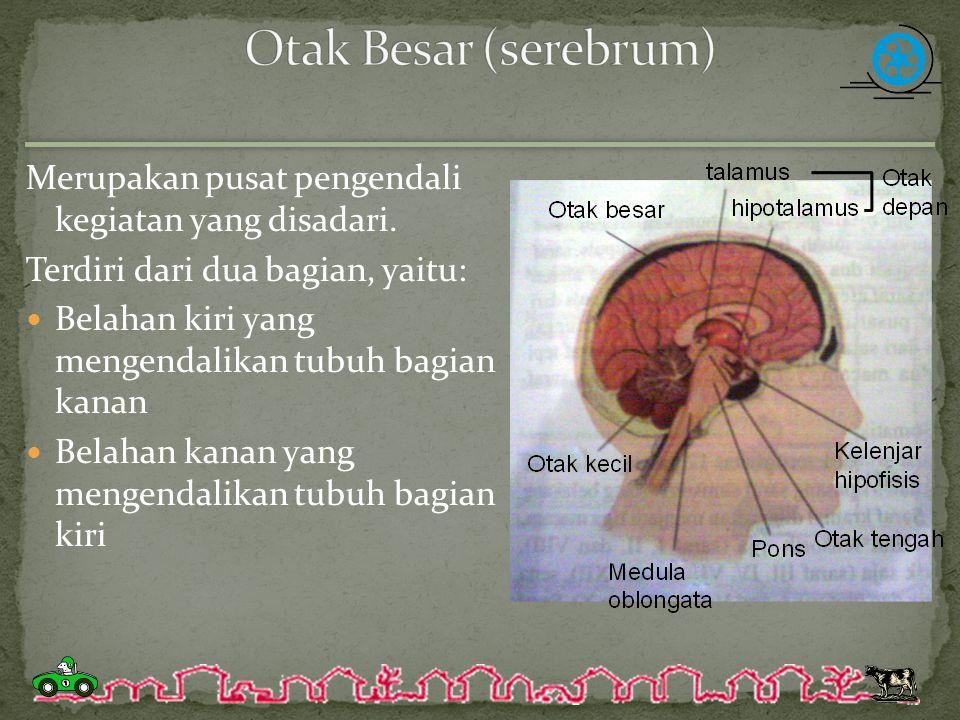 Otak Besar (serebrum) Merupakan pusat pengendali kegiatan yang disadari. Terdiri dari dua bagian, yaitu: