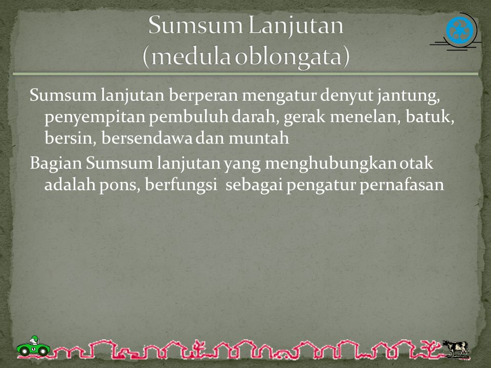 Sumsum Lanjutan (medula oblongata)
