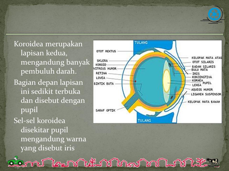 Koroidea merupakan lapisan kedua, mengandung banyak pembuluh darah