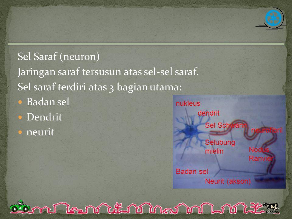 Jaringan saraf tersusun atas sel-sel saraf.