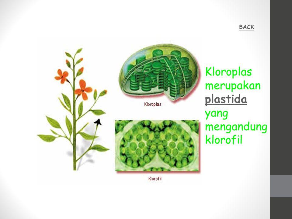 Kloroplas merupakan plastida yang mengandung klorofil