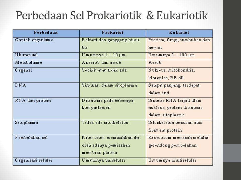 Perbedaan Sel Prokariotik & Eukariotik