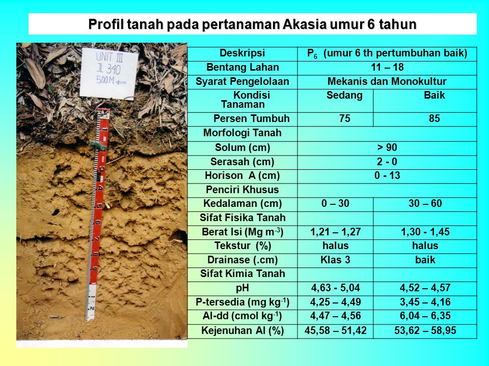 Profil tanah pada pertanaman Akasia umur 6 tahun